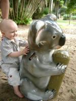 Jack_ride_koala